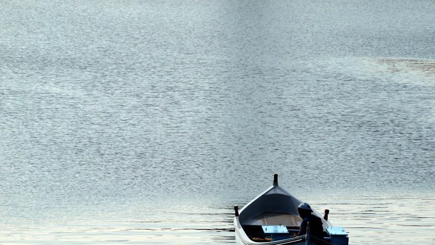 Ще проверяват плажовете заради убития делфин