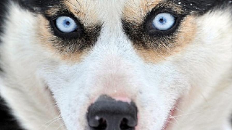 Постоянен арест за мъж, отвлякъл куче за откуп