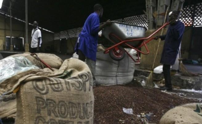 Застрашено ли е какаото от изчезване?