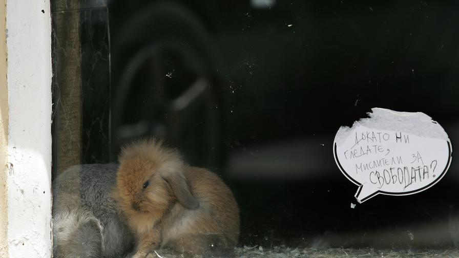 Зайчето Страхил - пациент номер 1000 в Спасителния център за диви животни