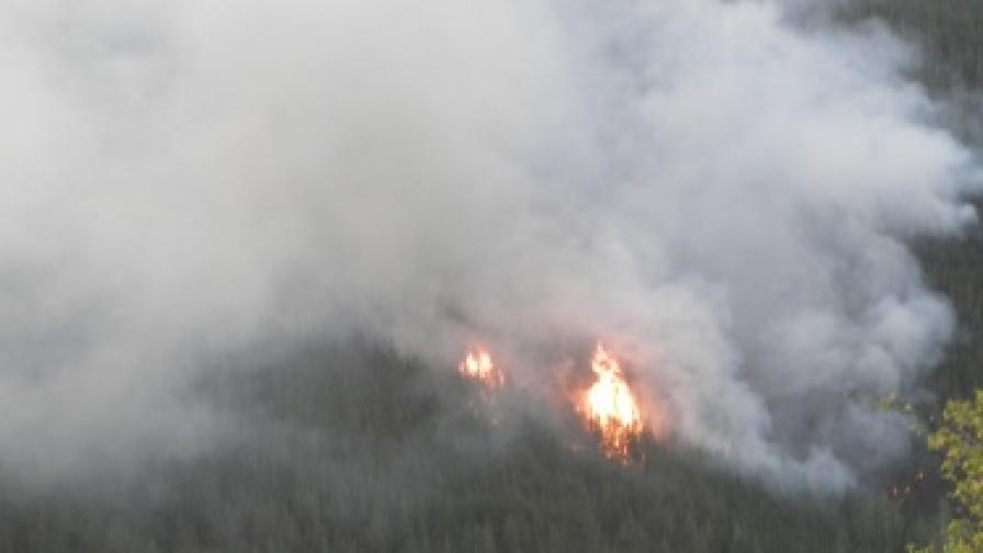 Над 400 души гасят пожара в община Белица