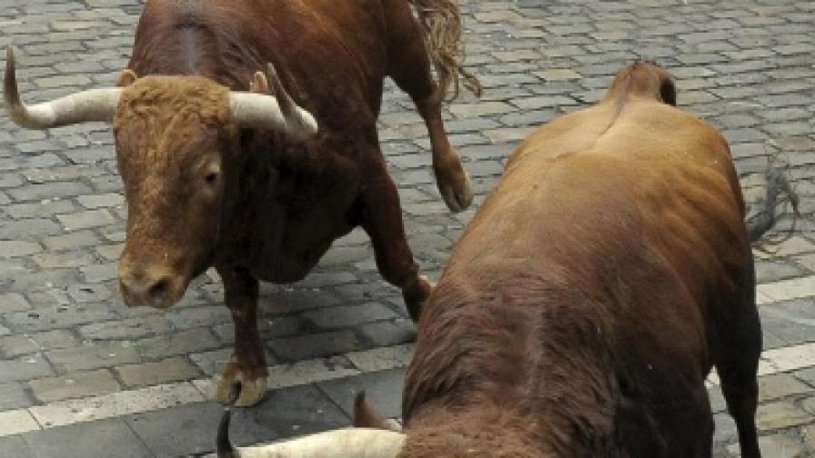 Изплашени бикове блокираха кръстовище в Димитровград