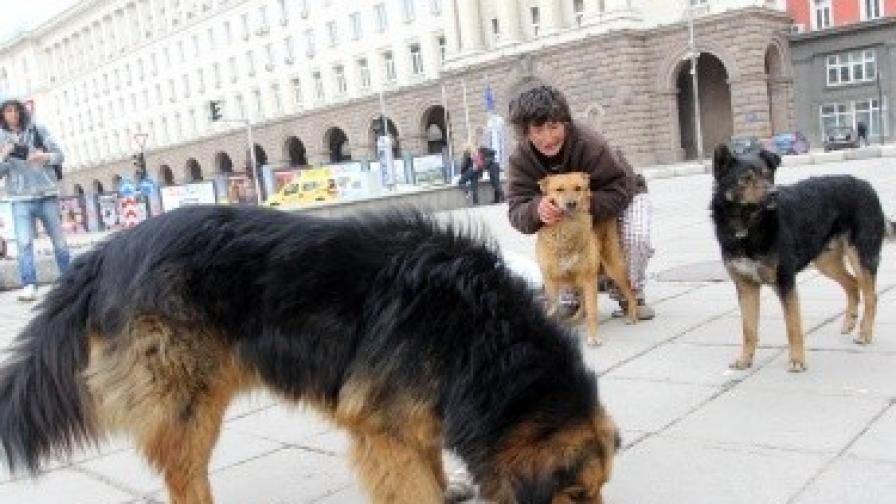 Броят на бездомните кучета в София расте