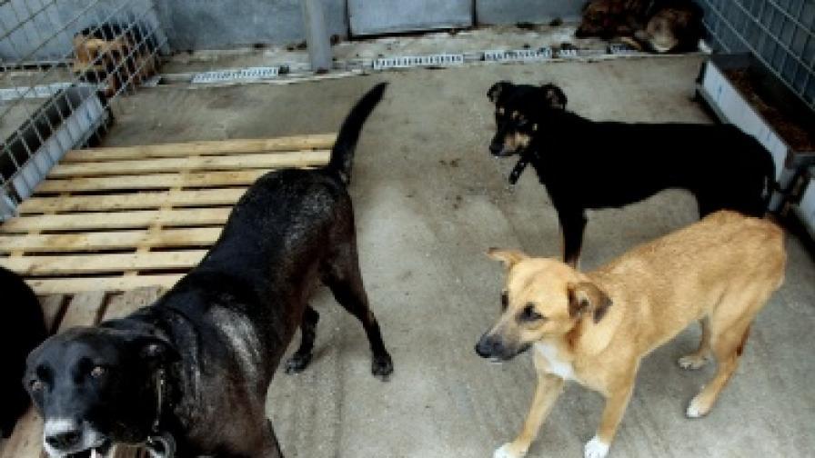 Прибират масирано улични кучета в София от началото на ноември