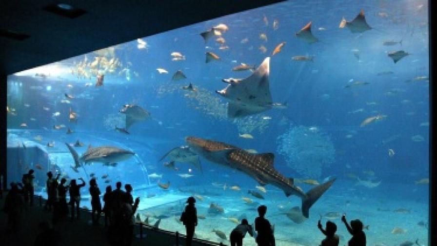 Най-голямото морско чудовище вече има име