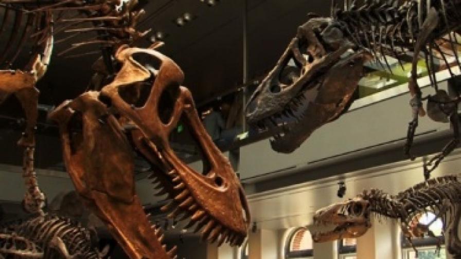 Разкриха един от брачните ритуали при динозаврите