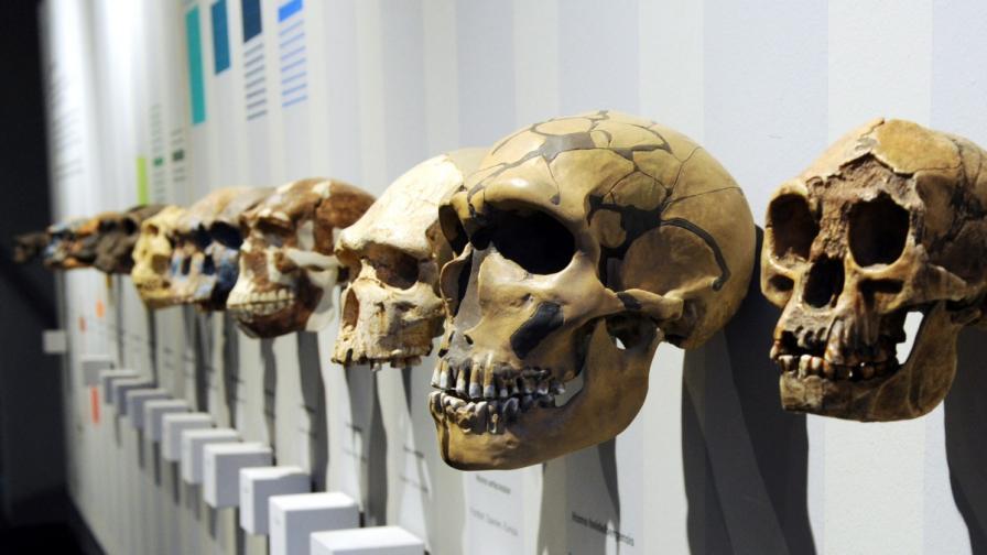 Еволюцията може да е обратим процес?