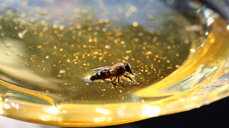България ще забрани опасни за пчелите пестициди