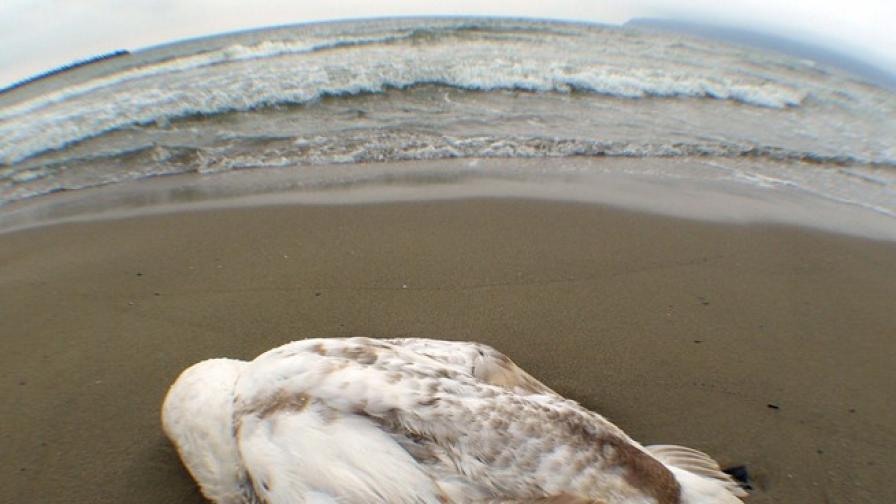 Лебед на Елизабет ІІ открит опечен край Уиндзор