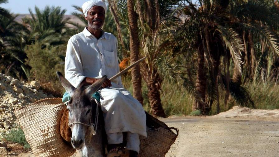 Арест за египтянин, кръстил магарето си на генерал