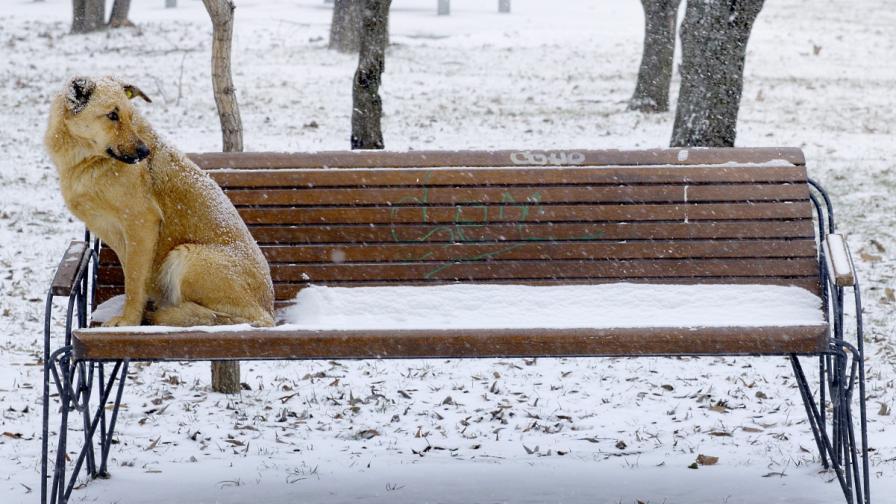 Температурите в Румъния падат до минус 6 градуса