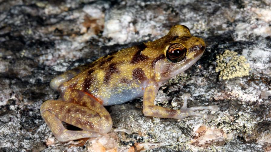 Учени откриха три нови вида гръбначни в Австралия