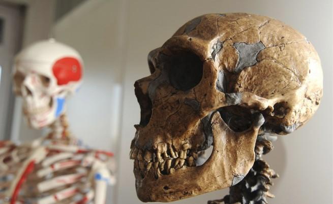 Изчислиха колко време сме съжителствали с неандерталците