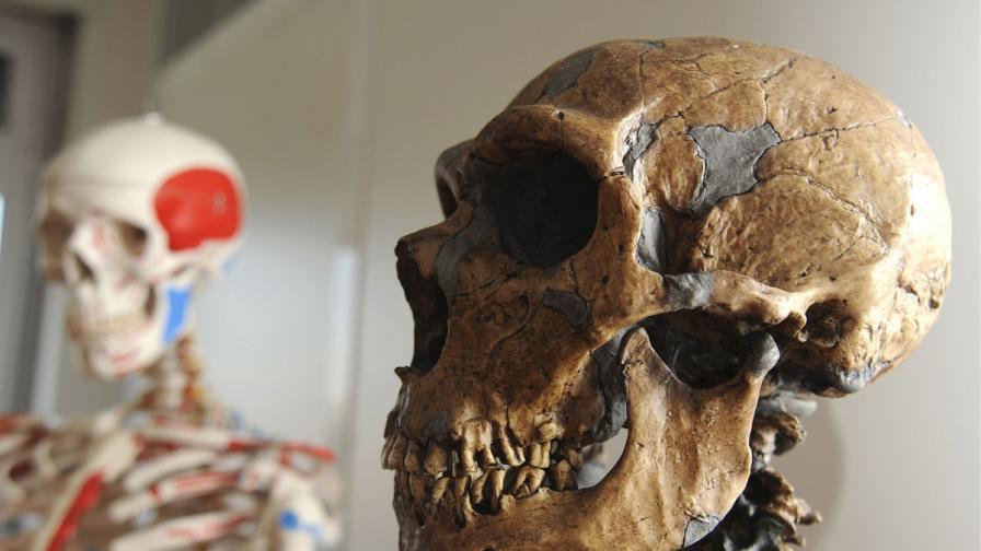 Изчислиха колко време сме съжителствали с неандерталци