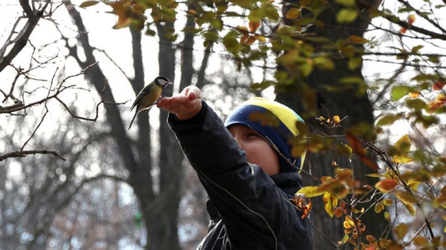 България е сред страните с най-много застрашени птици