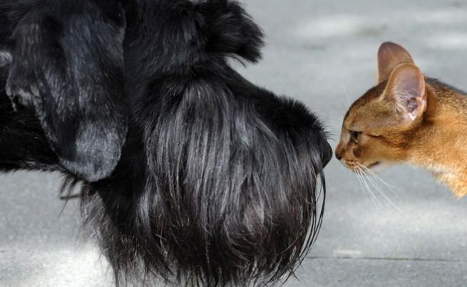 Котките и кучетата били братовчеди